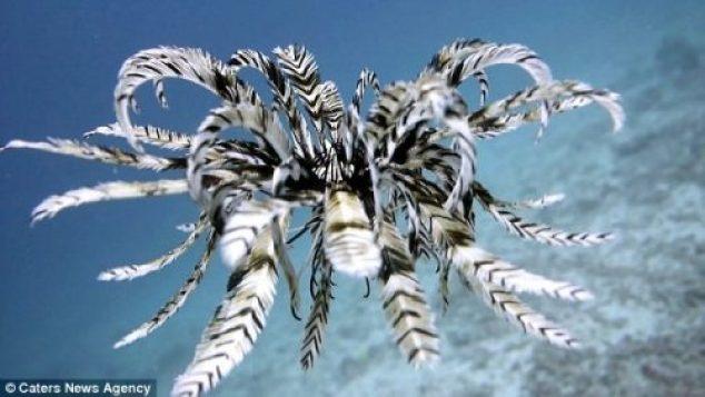 То ли рыба, то ли птица - редкие кадры с морской лилией