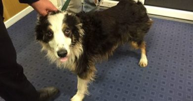 Собака шла почти 2 месяца и преодолела расстояние в 50 миль, чтобы найти своих хозяев