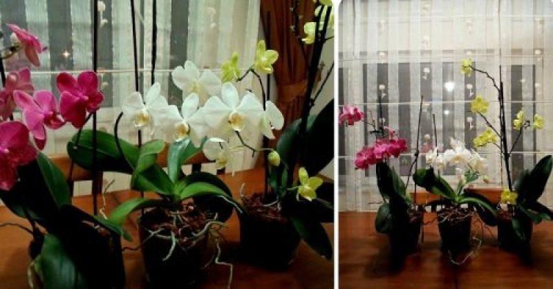 Не знаешь как правильно удобрять и подкармливать орхидеи? Читай!