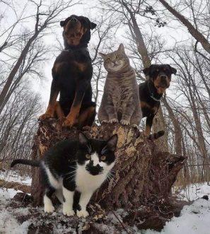 animals-about-to-drop-album-photos-58aeb53dc7580__700