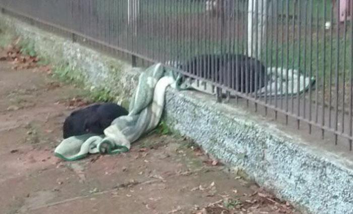 Собака утащила одеяло своей хозяйки на улицу. И преподала нам, людям, хороший урок