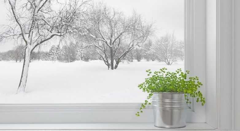 8 советов, которые помогут подготовить домашние растения к зиме