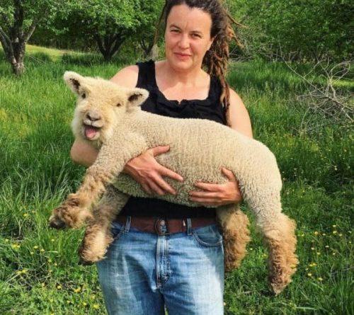 Мимимишные овечки породы бэбидолл