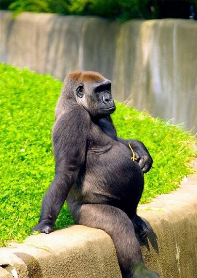 19 очаровательных фото будущих мам из мира животных в ожидании потомства