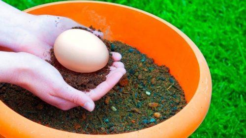Несвежее яйцо в почве как кладезь полезных для растений элементов