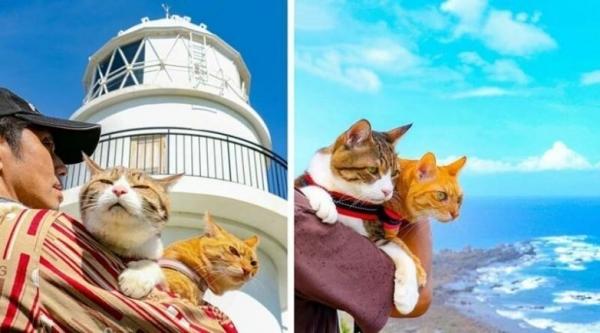 Кошки, которые путешествуют вместе со своим хозяином