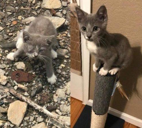 Животные до и после того, как им подарили дом