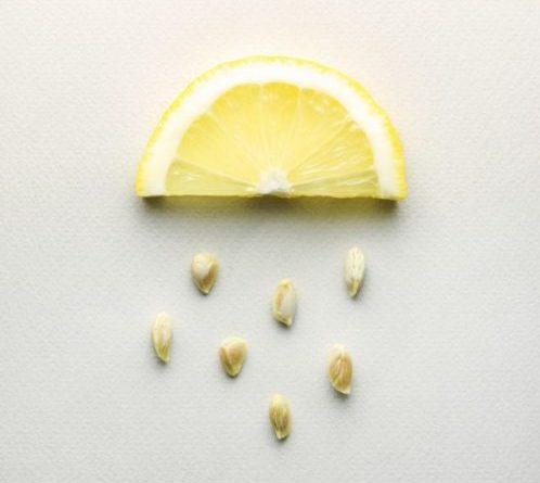 Полезные свойства лимонных косточек для организма