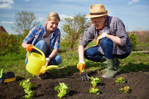 Главные правила весенней посадки растений