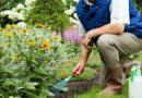 Нужные советы огородникам