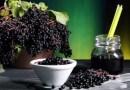 Полезные свойства черной бузины