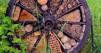соорудите на участке домик для насекомых
