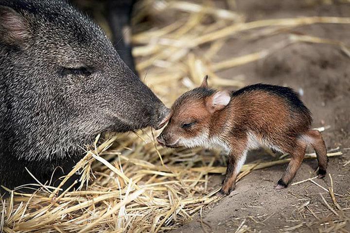 25 редчайших детёнышей животных, которых вы никогда не видели
