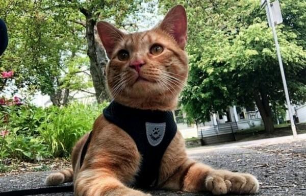 """Кот с """"дополнительными"""" лапками"""