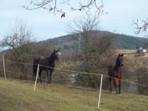 Zvědaví koně