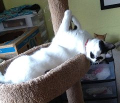 Loki claims her place to stretch out. More space is needed to save the feral cat population.