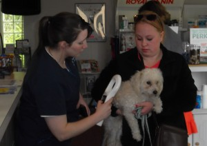Bethany checks lost pup for microchip.