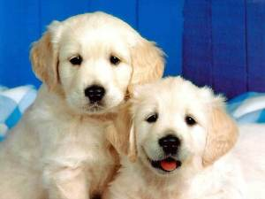 puppies-pics-two