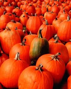pumpkins-002