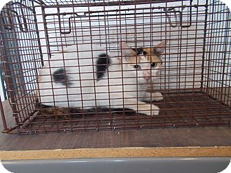 feral cat in cage2