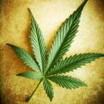 RGPF Intercepts Illicit Drugs