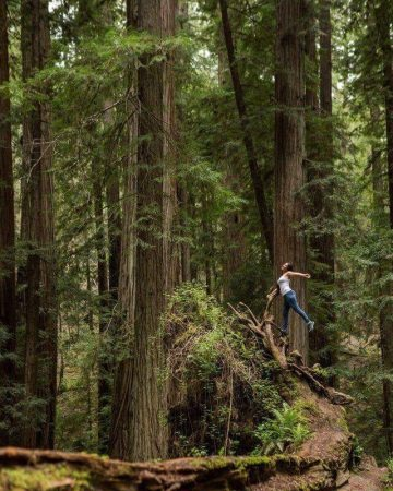 Nine dances in the Redwood Forest of California