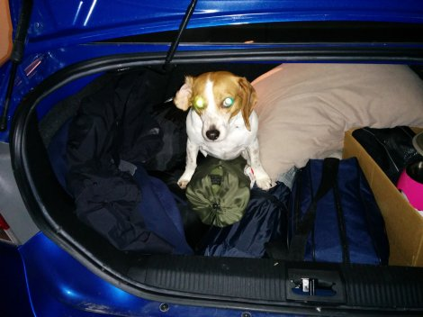 """She climbed into my trunk while I was packing. I imagine she's saying: """"So. Where are we going?"""""""