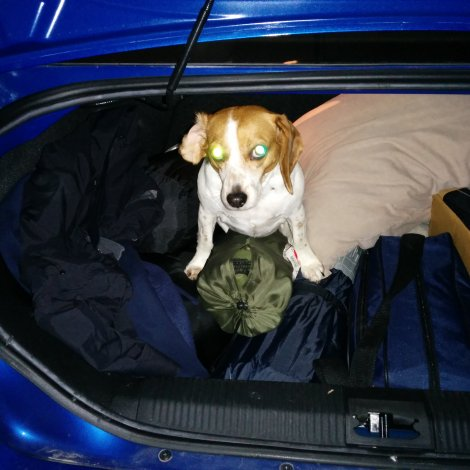 "She climbed into my trunk while I was packing. I imagine she's saying: ""So. Where are we going?"""