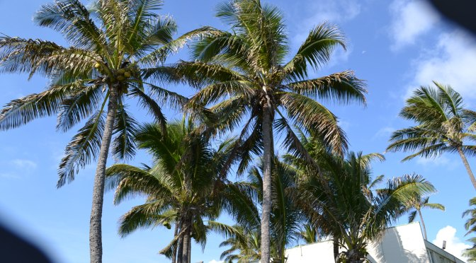 Anna's Hawaiian Vacation: Day 1