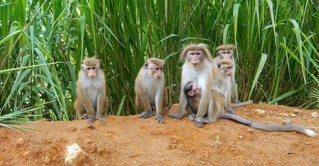 Sri Lanka 6 septembre - Nuwara Eliya 209