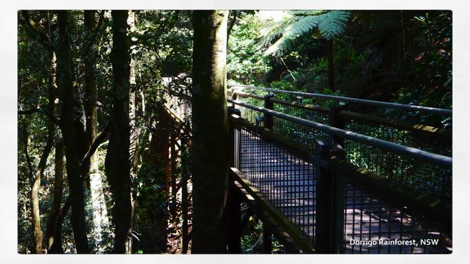 dorigo rainforest 1
