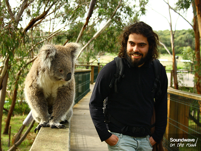 soundwaveontheroad_koala