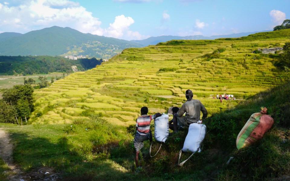 Villageois dans la Vallée de Katmandou