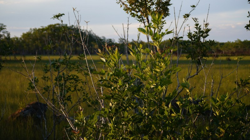 Everglades Floride-7