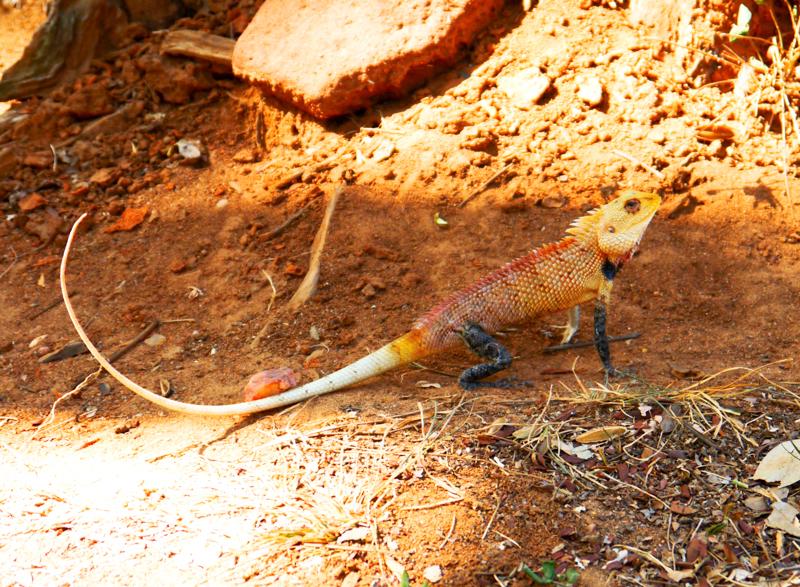 Ecotourisme au Sri Lanka (1 sur 5)