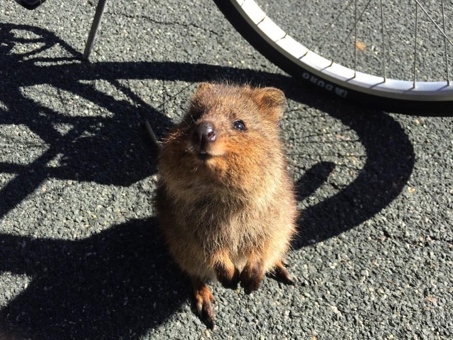 voir des animaux en liberté en australie : celui ci est adorable n'est ce pas?