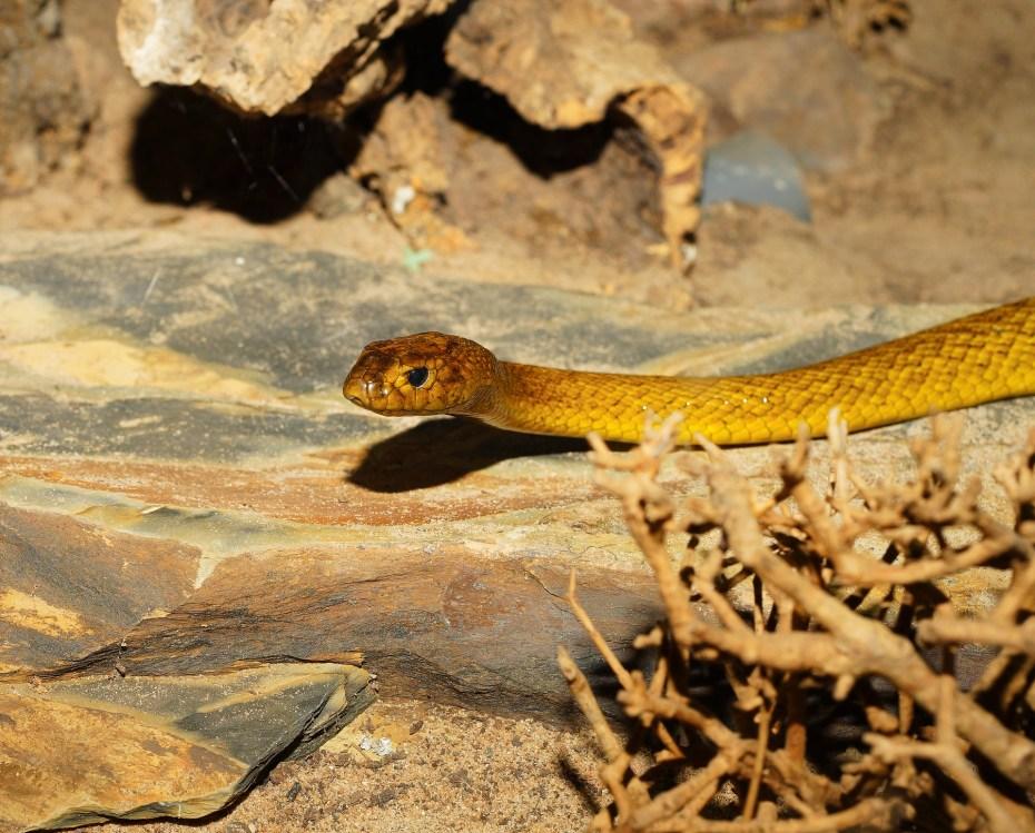 voir des animaux en liberté en australie mieux vaut eviter les serpents