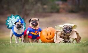 #Curiosidades :  Disfraces divertidos para tu perro ¡Chécate!
