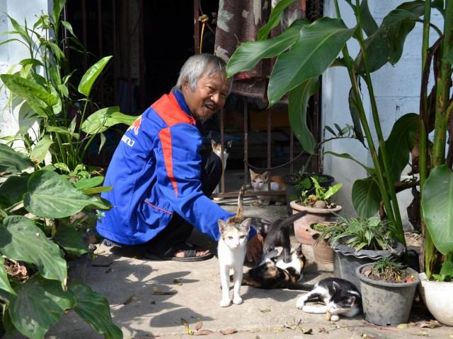 chiang-mai vieillard-chat-noworries