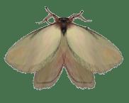 the lovely lovely moth