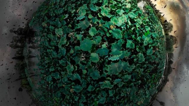 Catherine Nelson image, Sydney Botanical Gardens