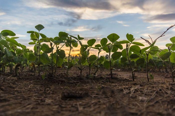 żyzność gleby