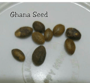 Miracle Seed