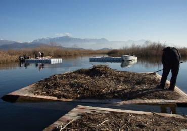 Postavljenje platforme za gniježđenje pelikana u NP Skadarsko jezero