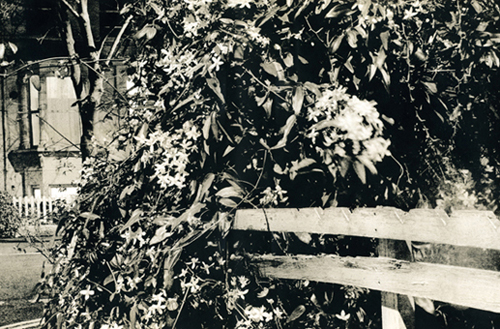 Chasing Shadows - fence
