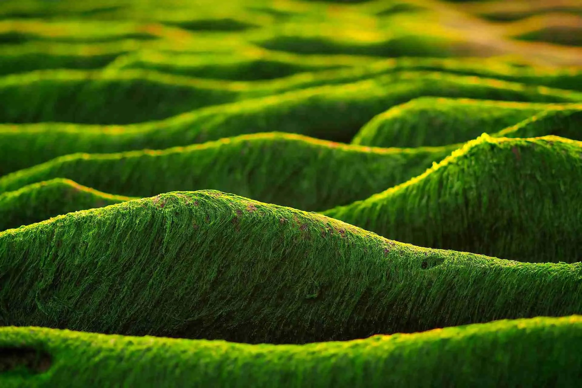Read more about the article Soltanto un' alga o due? Non scherziamo! Scopri qui i benefici
