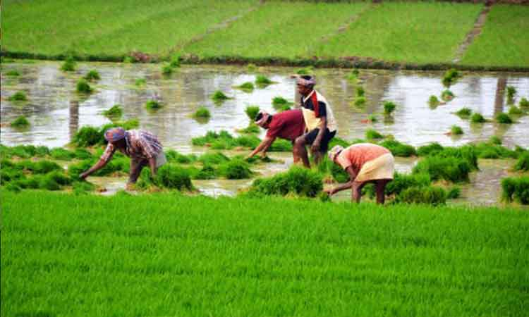 New technology may help Indian farmers double income - NP News24