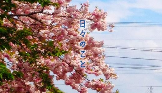 リベルテにも春がきて、お散歩がいい季節○