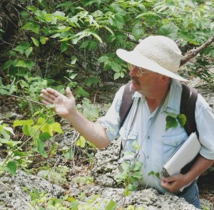 In a narrow side canyon off Cibolo Creek, Bill Carr examines the vine he helped name. Carr also demonstrates that one characteristic of the leaves is that they will cling to clothing like Velcro. (Photo by Bill Ward)