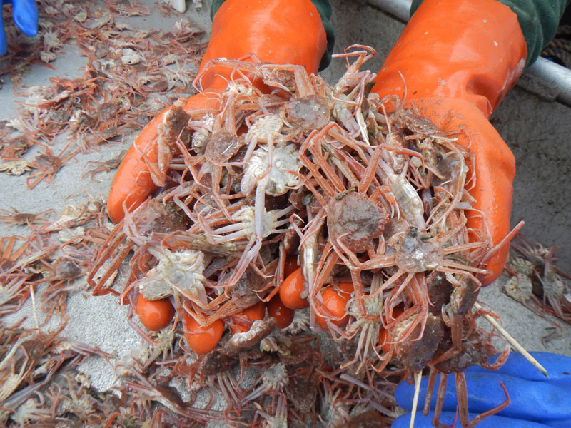 Commercial Shellfish Management – Crab Stock Assessment Support
